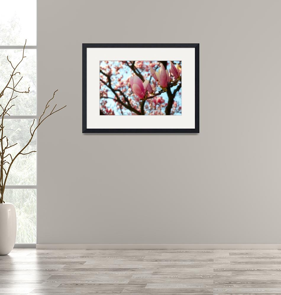 """""""Magnolia in Spring""""  (2015) by Michelle1991"""