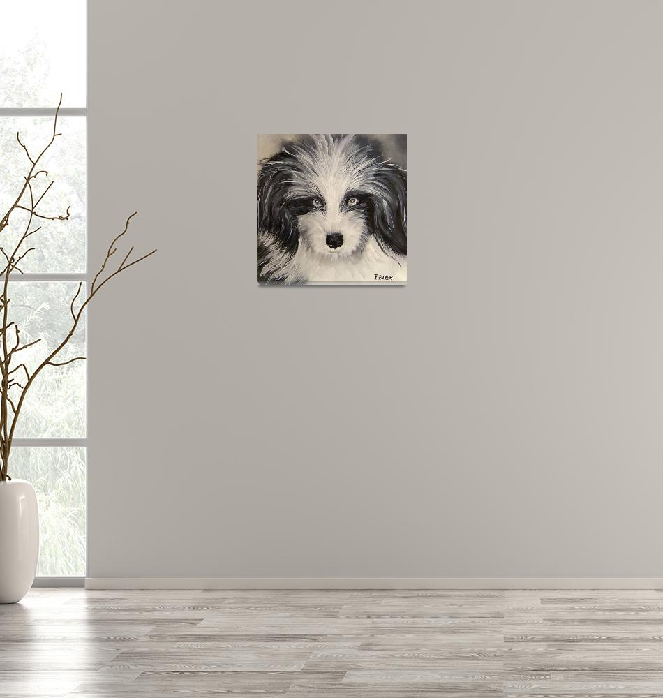 """""""IK-Tibetan Terrier""""  by RussBaker"""