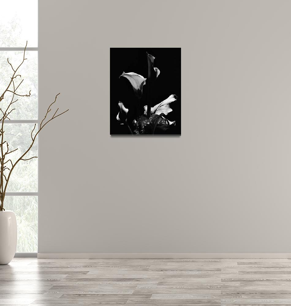 """Calla Lilies 3, Floral Still Life""  by Aldo"