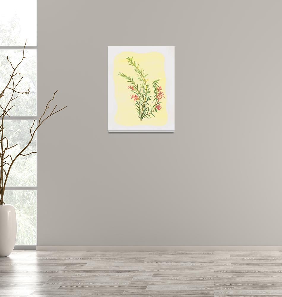 """ROSEMARY (Rosemarinus officinalis)""  (2008) by EveHoward"