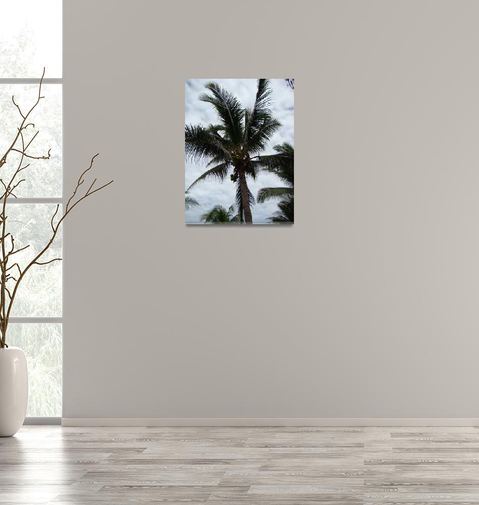 """Palm Tree""  (2009) by alymariephotography"