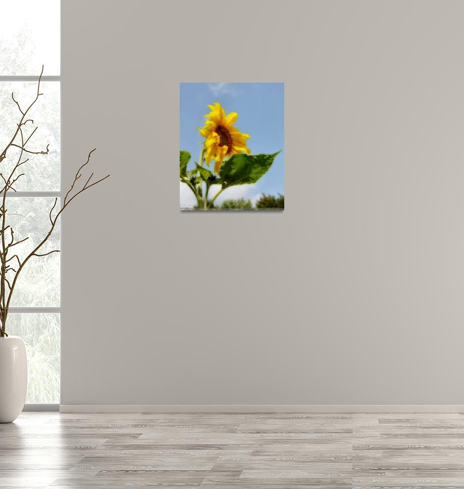 """""""Up to the Sun""""  (2008) by Izabela"""