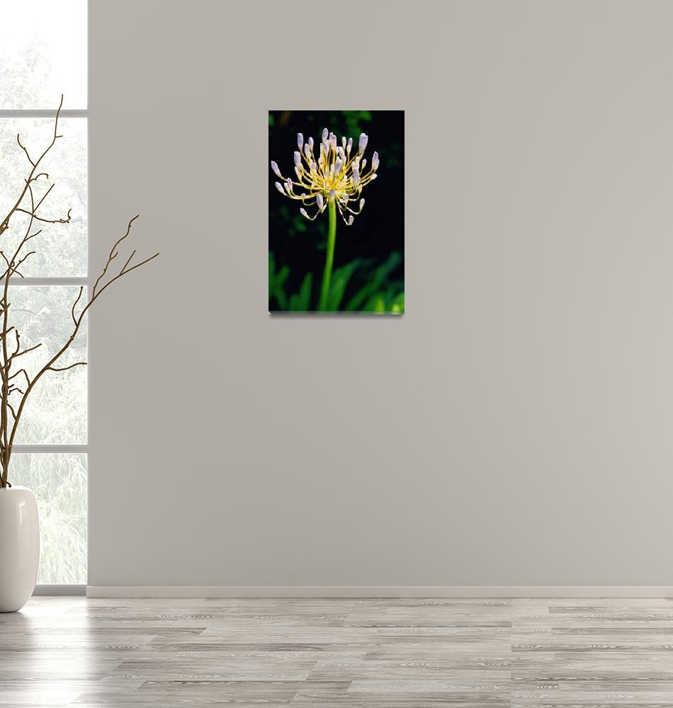 """single flower""  (2006) by drewhancock"
