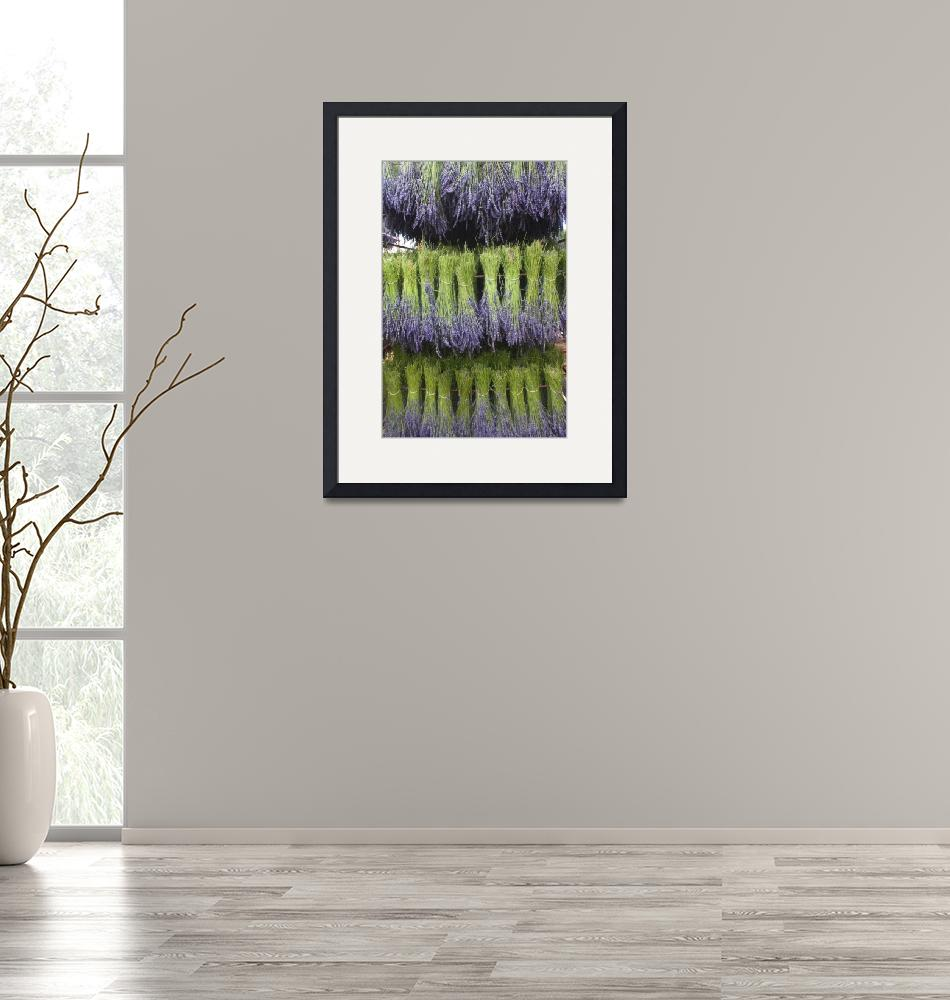 """""""Drying Lavender in Provence""""  (2010) by floria"""