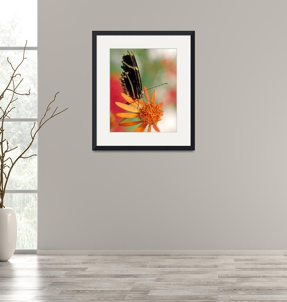 """""""Butterfly on Orange Flower Picture""""  by kphotos"""