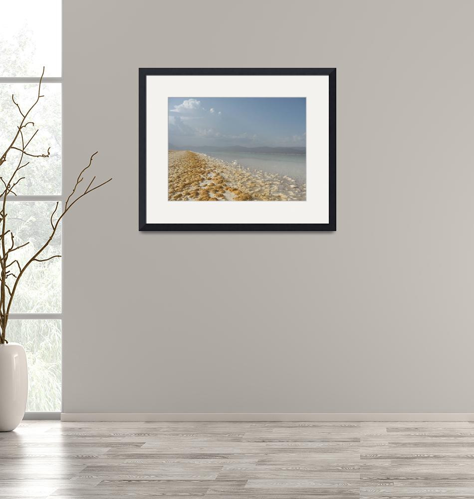 """""""View from the salt sea shore""""  by fluckduffy"""