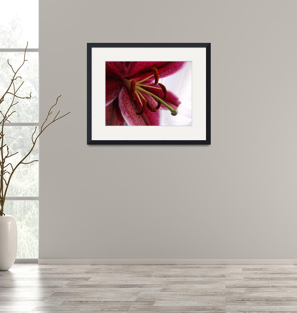 """""""Macro Oriental Red Lily""""  (2014) by edesigns15"""