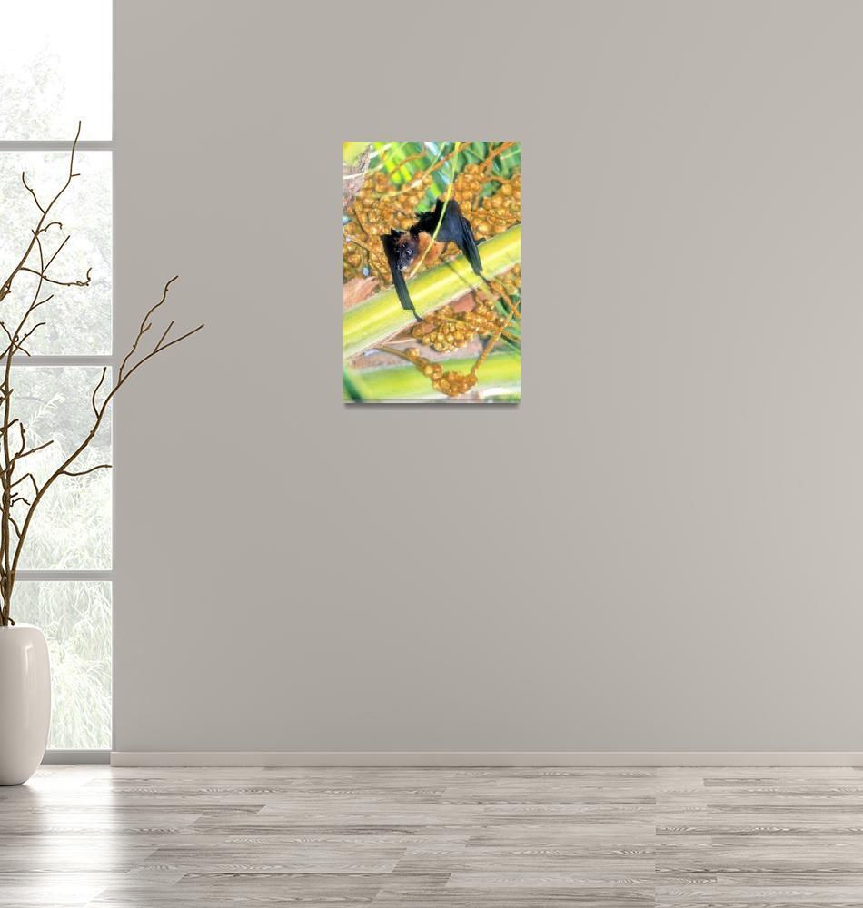 """Flying Fox or Fruit Bat""  (2000) by JoaoPonces"