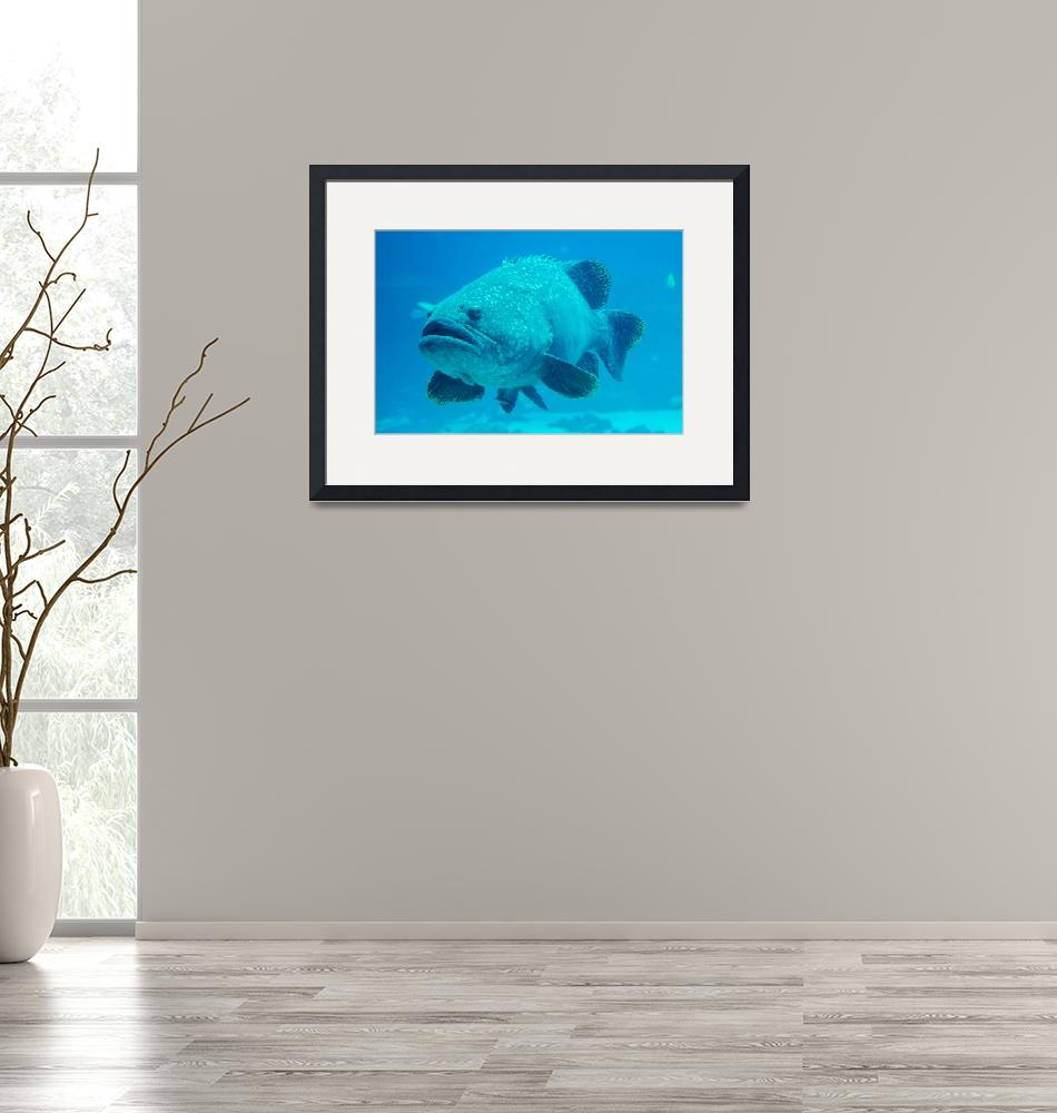"""""""giant grouper fish looking at diver""""  by digidreamgrafix"""