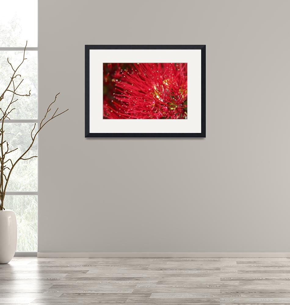 """Pohutukawa Bloom""  (2007) by reganrose"