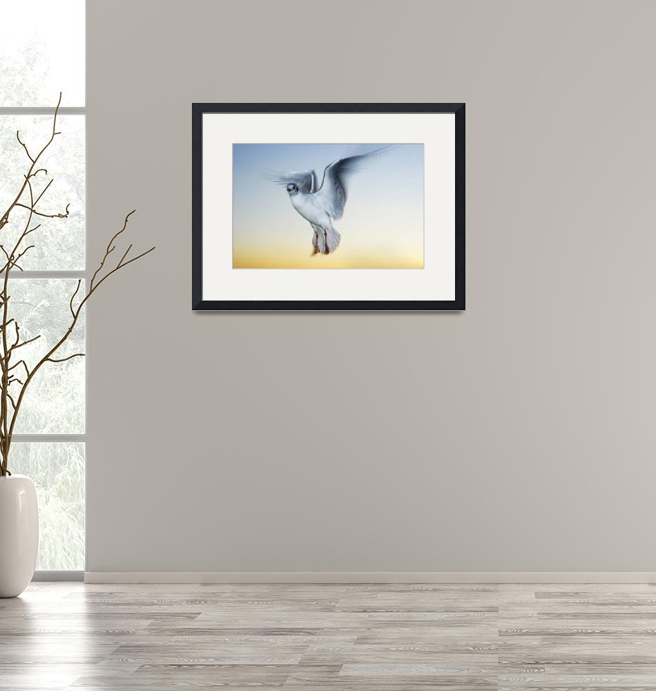 """""""Seagull at sunset.""""  (2009) by andrewaj"""