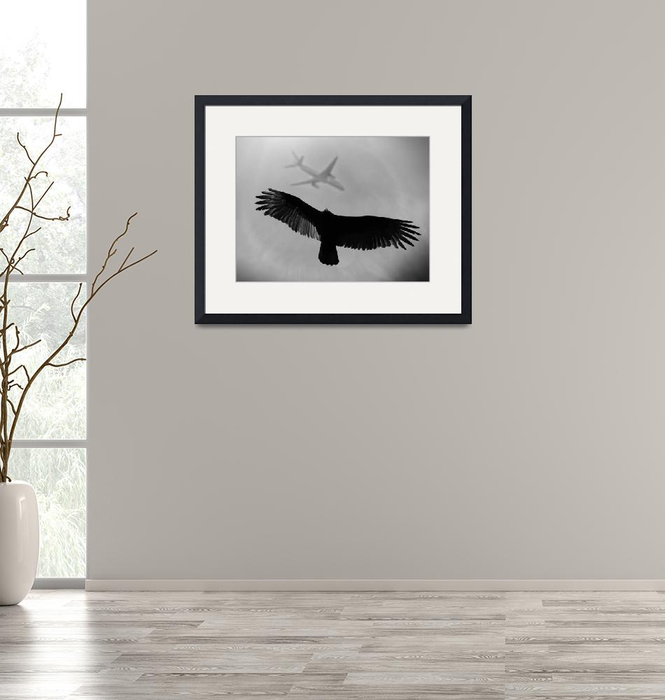 """""""Plane with flying bird""""  (2015) by artyimages"""