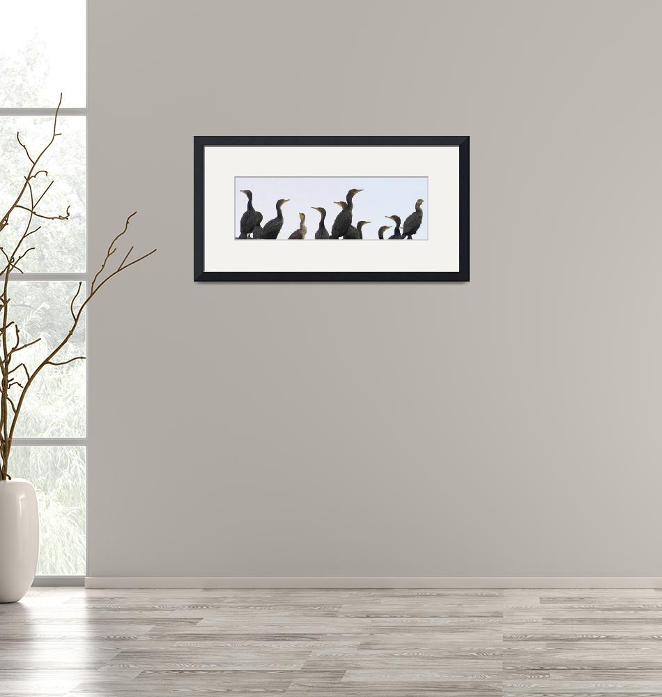 """Cormorants""  (2007) by byUside"