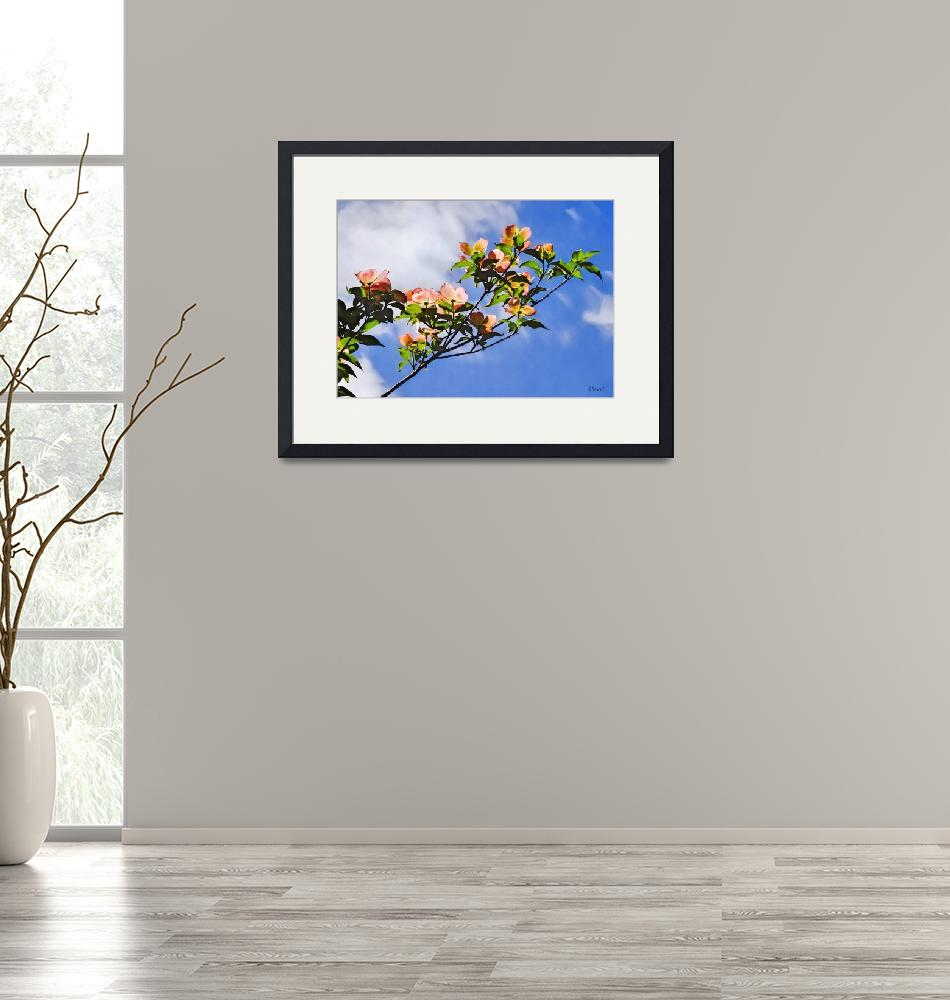 """""""Pink Dogwood Against the Sky"""" by susansartgallery"""