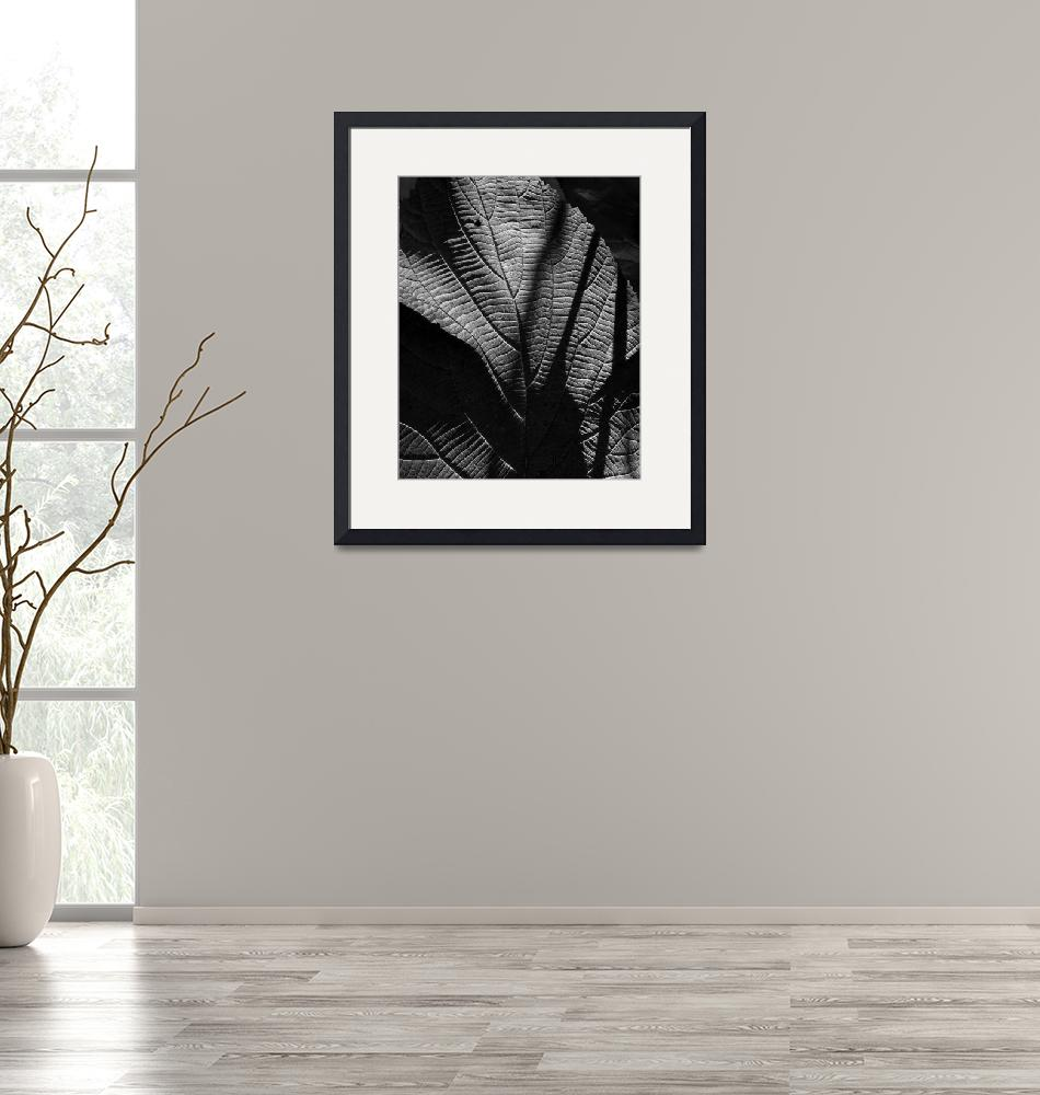 """""""Abstract Leaf In Black & White""""  (2010) by bavosiphotoart"""