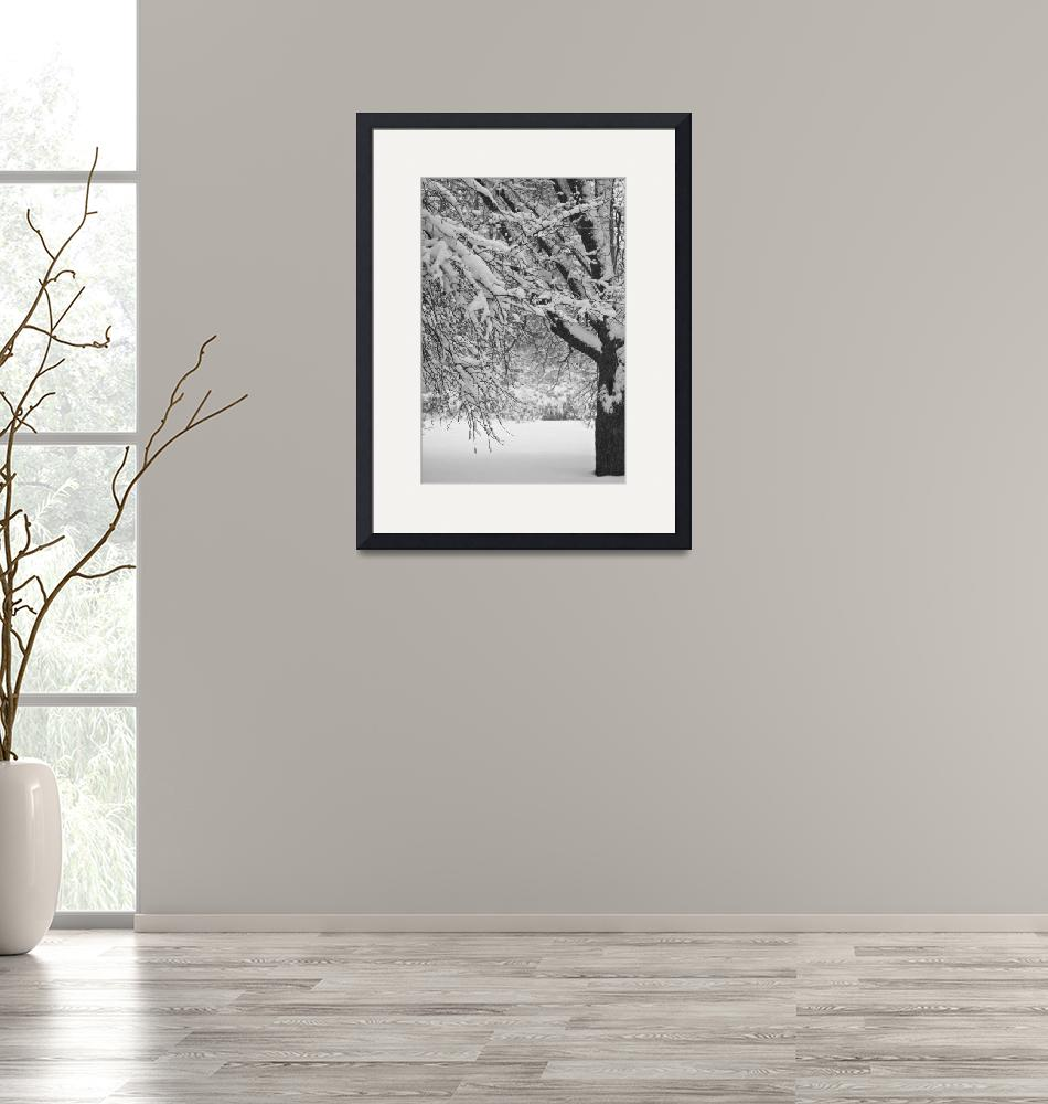 """""""Trees In Snow""""  (2010) by amyjlbphotos"""