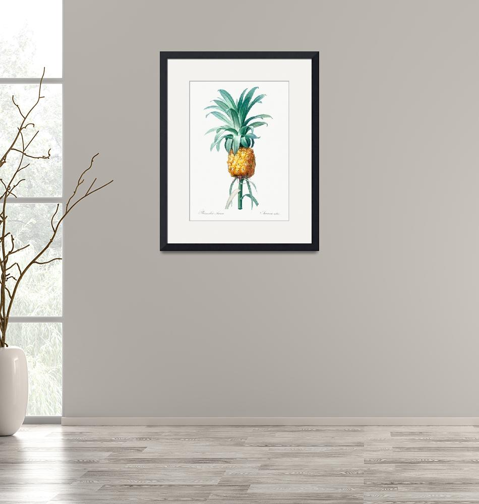 """""""Vintage Botanical Pineapple""""  by FineArtClassics"""