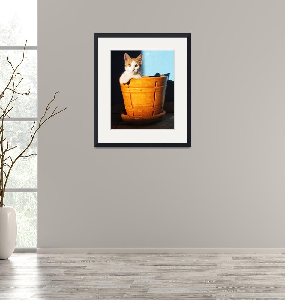 """""""Cat in Pot""""  (2011) by gmhharden"""