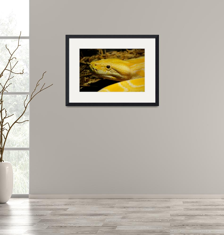 """""""Yellow and White Burmese Python""""  (2013) by artographic66"""