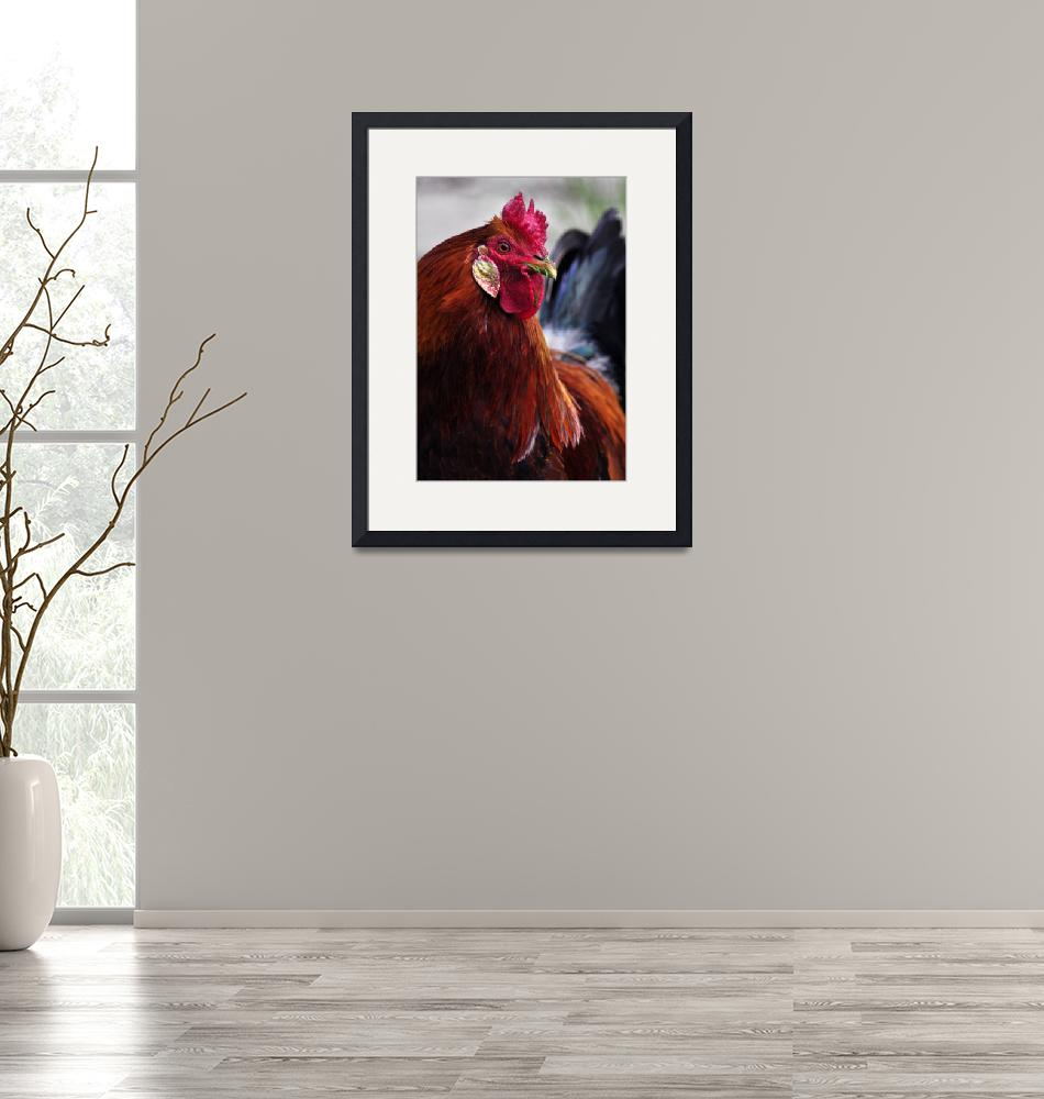"""""""red roosters""""  (2009) by LauraM"""