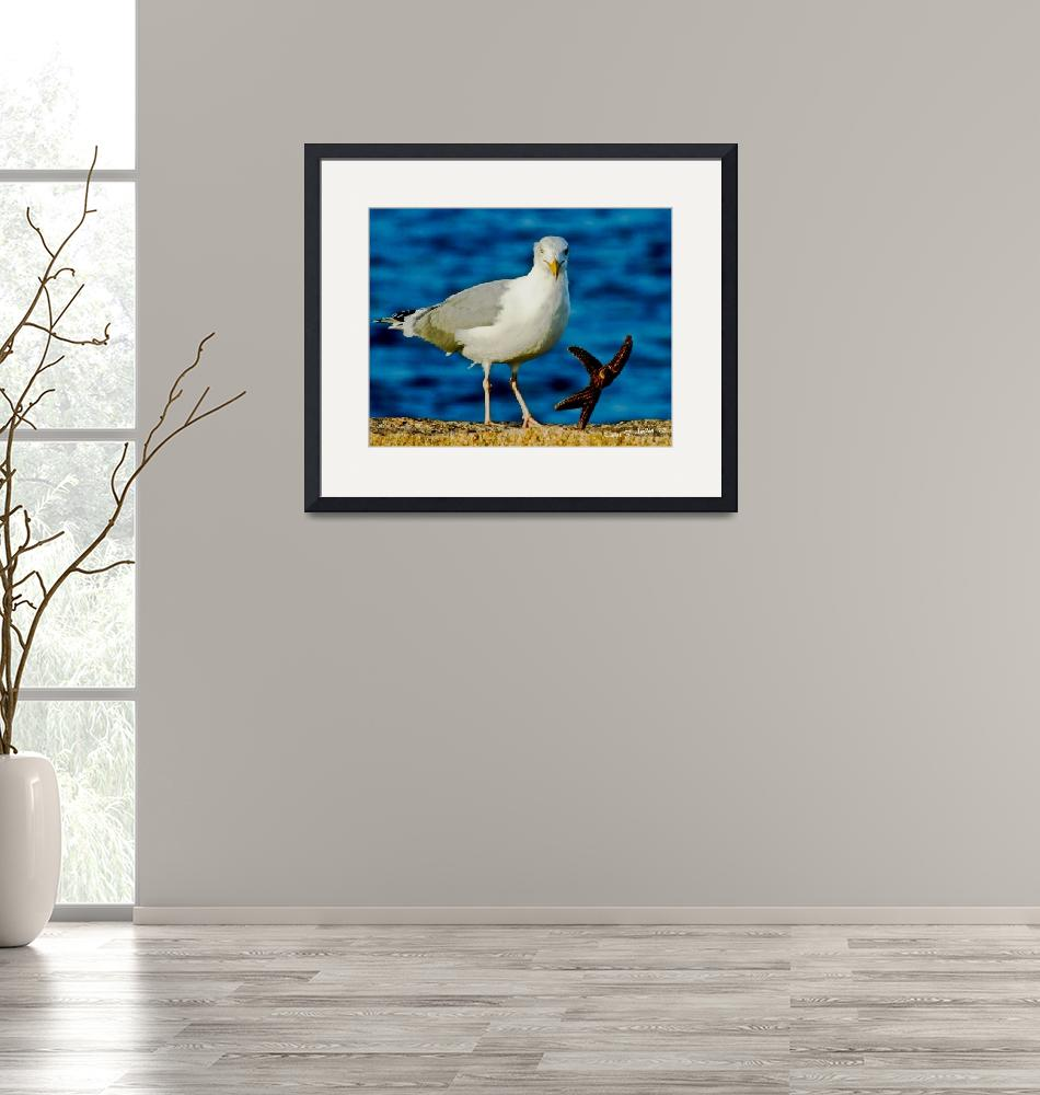 """""""Seagull Dancing with a Star""""  (2012) by PhotographsByCarolFAustin"""