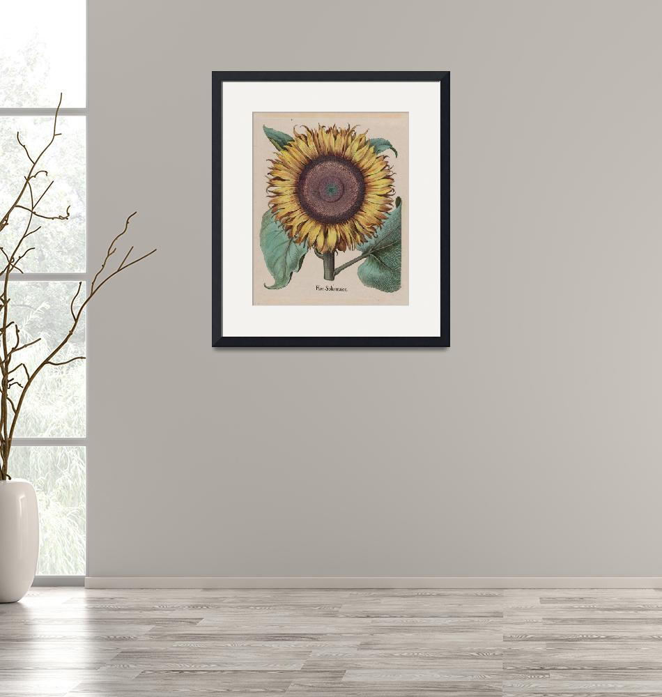 """""""Unidentified artist~Large Sunflower (Flos Solis Ma""""  by Old_master"""