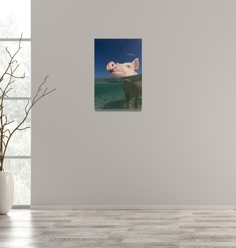 """""""Aqua Pig""""  (2008) by markstrickland"""