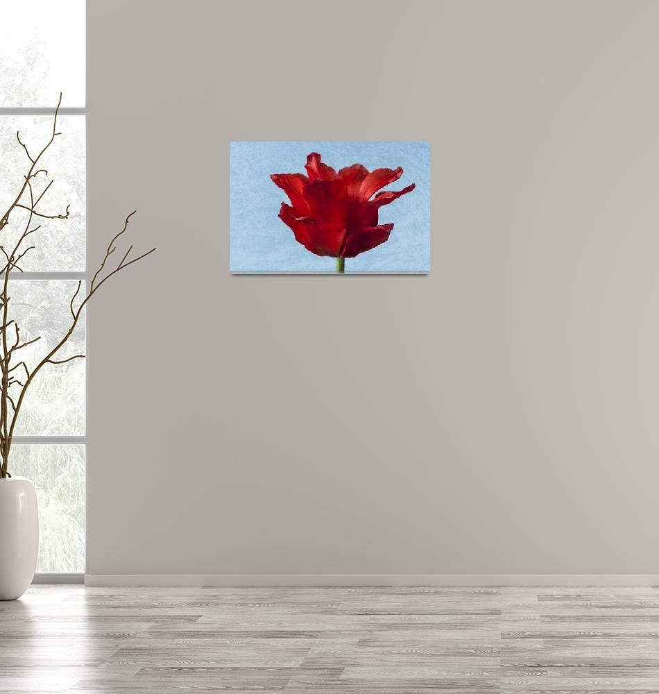 """""""Red Tulip""""  by StevePurnell"""