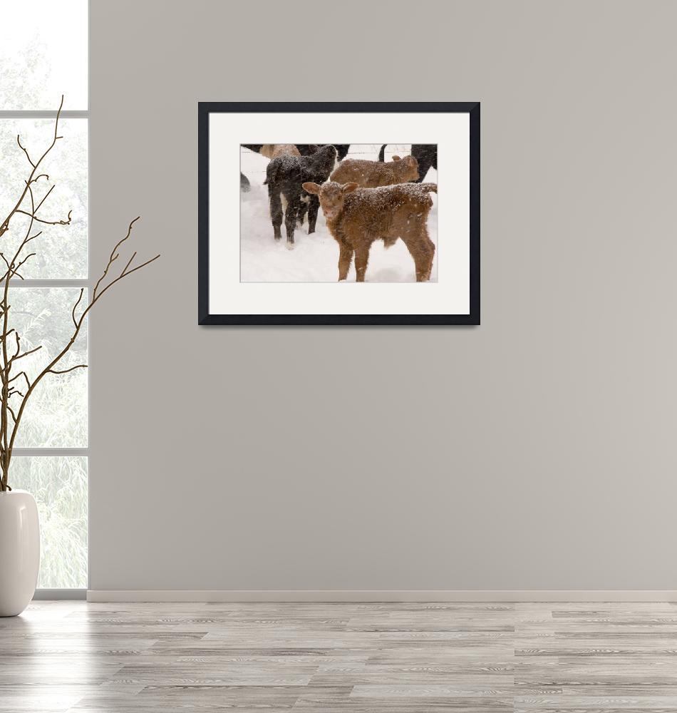 """""""Calves in The Snow""""  by Alleycatshirts"""