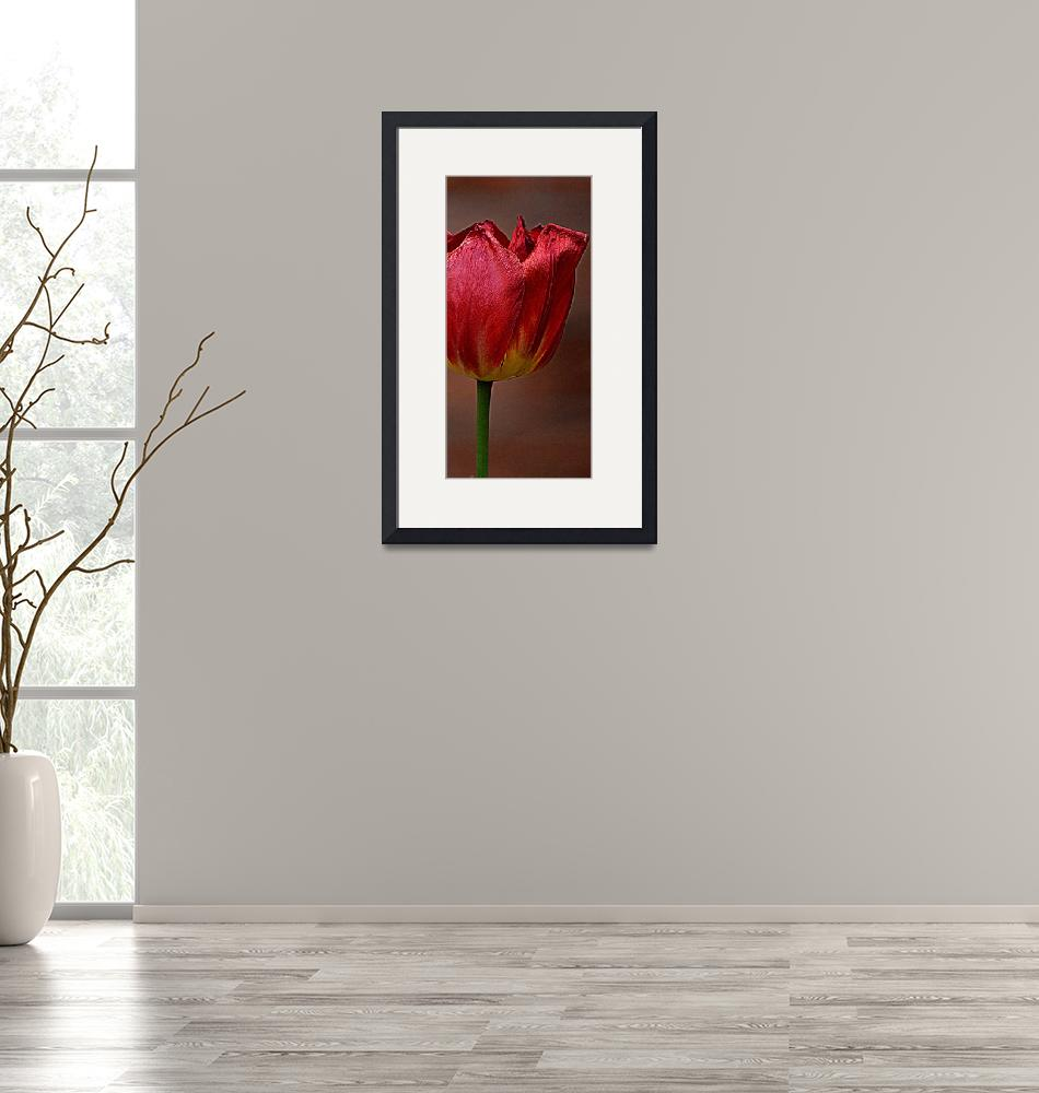 """Burgundy Tulip""  (2014) by joanhan"