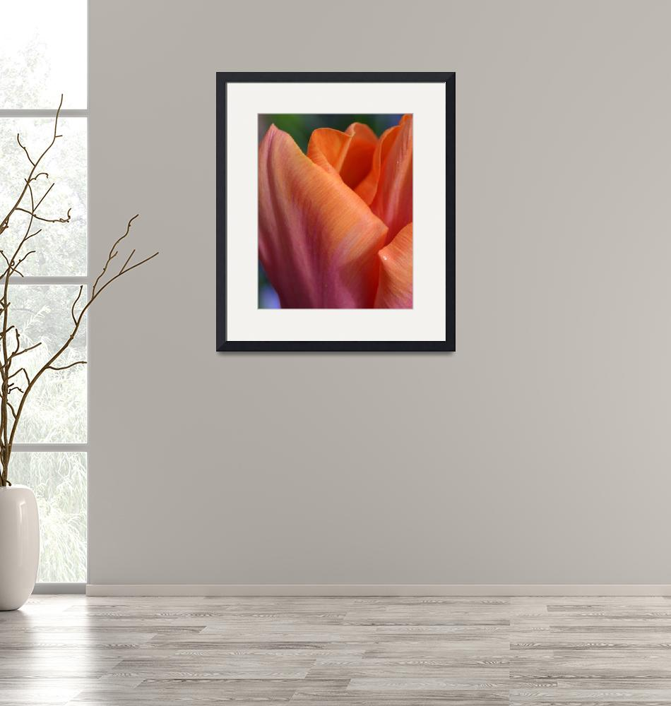 """""Orange Pink Tulip 21"" #21042315.0735 (2)""  (2015) by achimkrasenbrinkart"