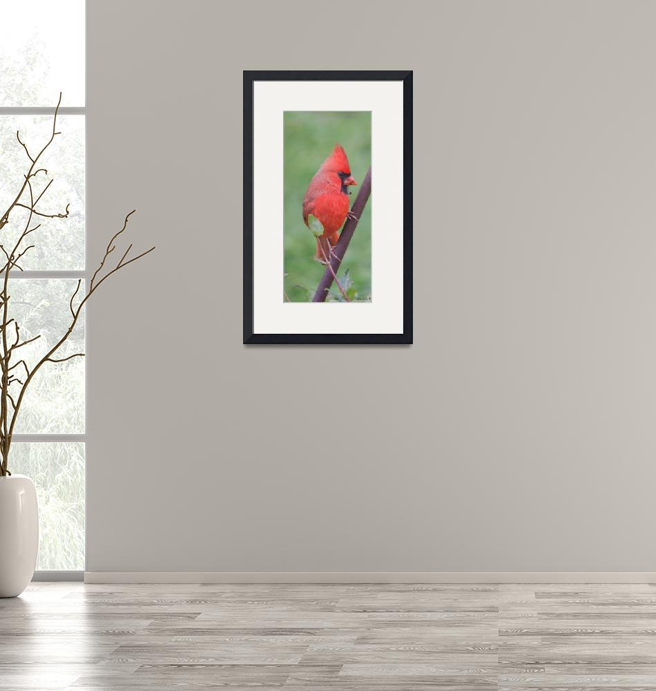 """""""Northern Cardinal"""" (2012) by WildAboutNaturePhotography"""