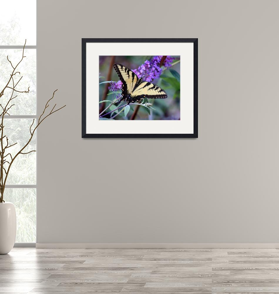 """Eastern Tiger Swallowtail Butterfly""  (2013) by KsWorldArt"