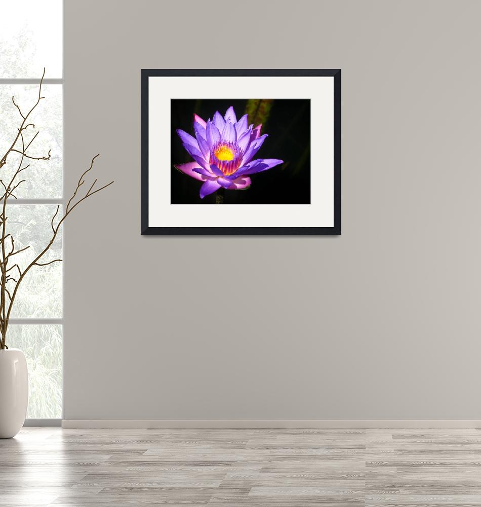 """""""Purple Lily""""  (2010) by A-Moment-In-Time"""