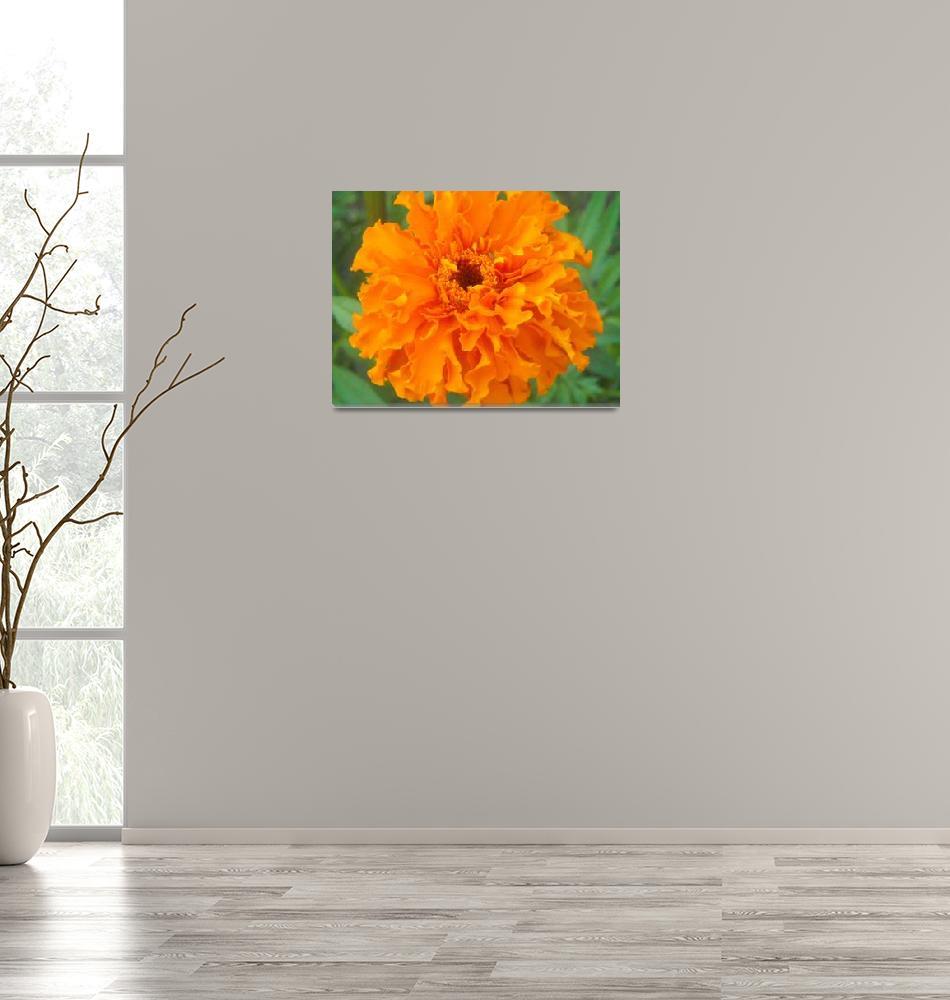 """""""orange profusion""""  by amandahattabaugh"""