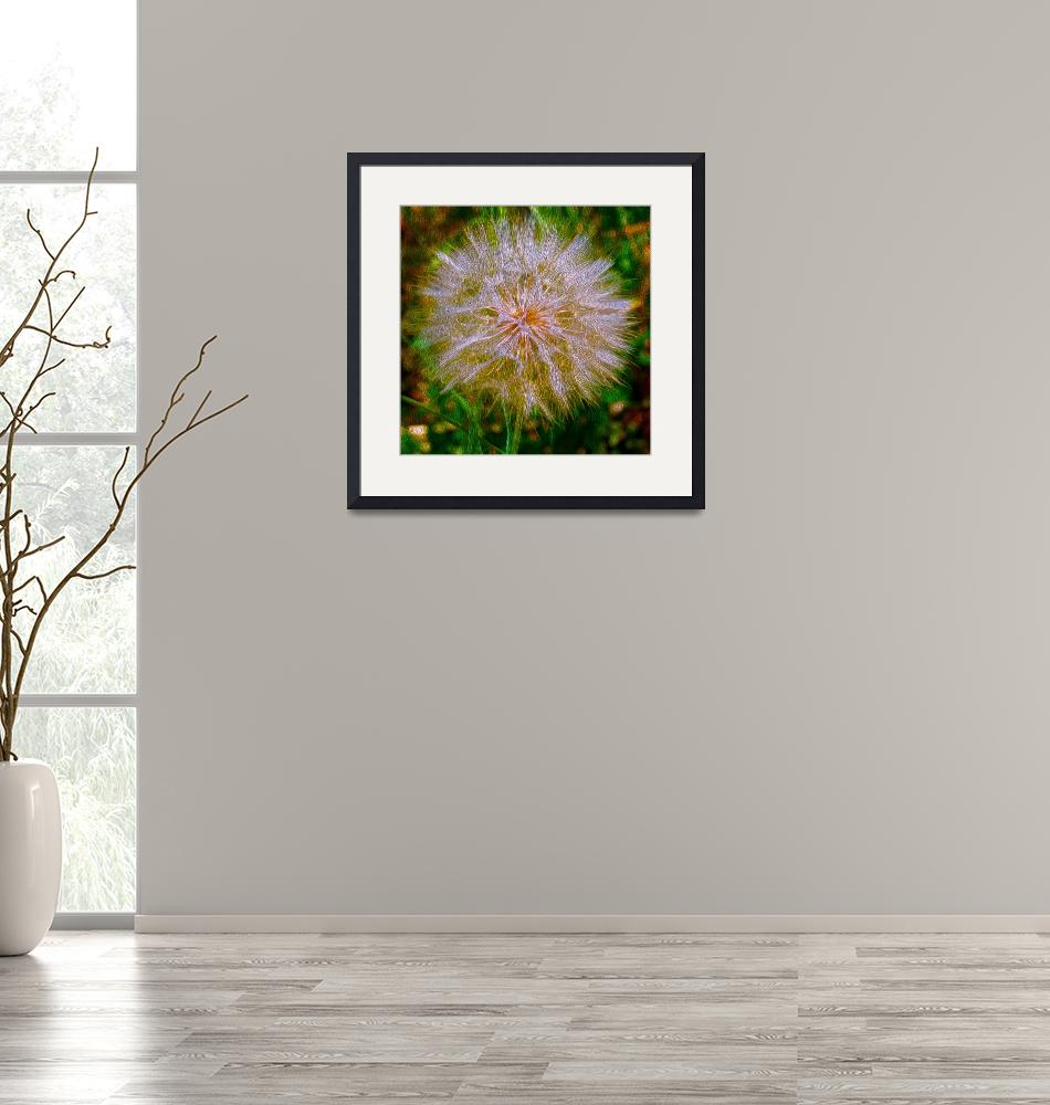 """""""Dandelion""""  (2000) by lifescaping"""