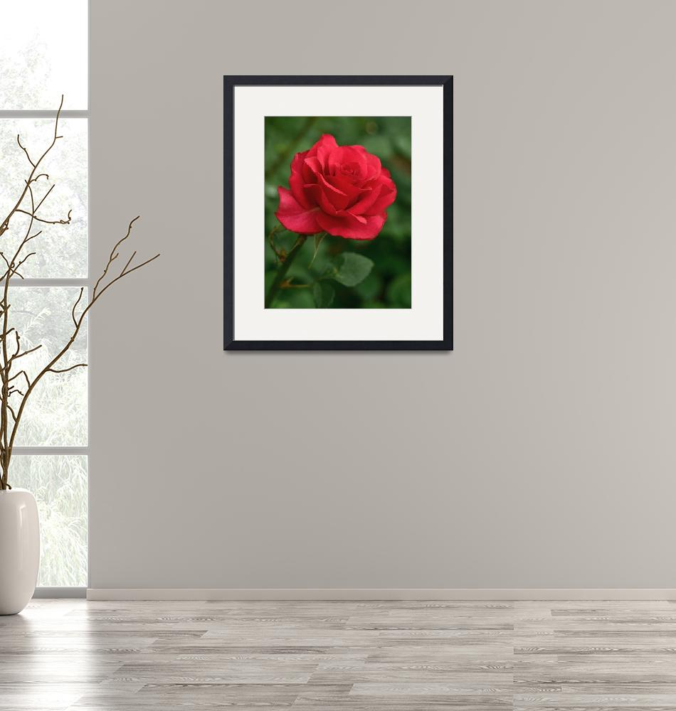 """""""A Rose by Any Other Name Would Smell as Sweet""""  by erinshine"""