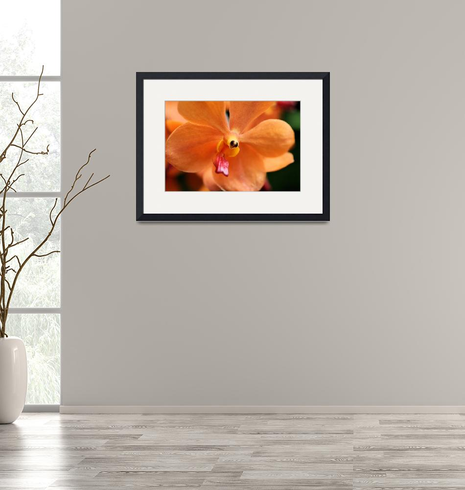 """Orchid In Orange""  by DorothyWilson"
