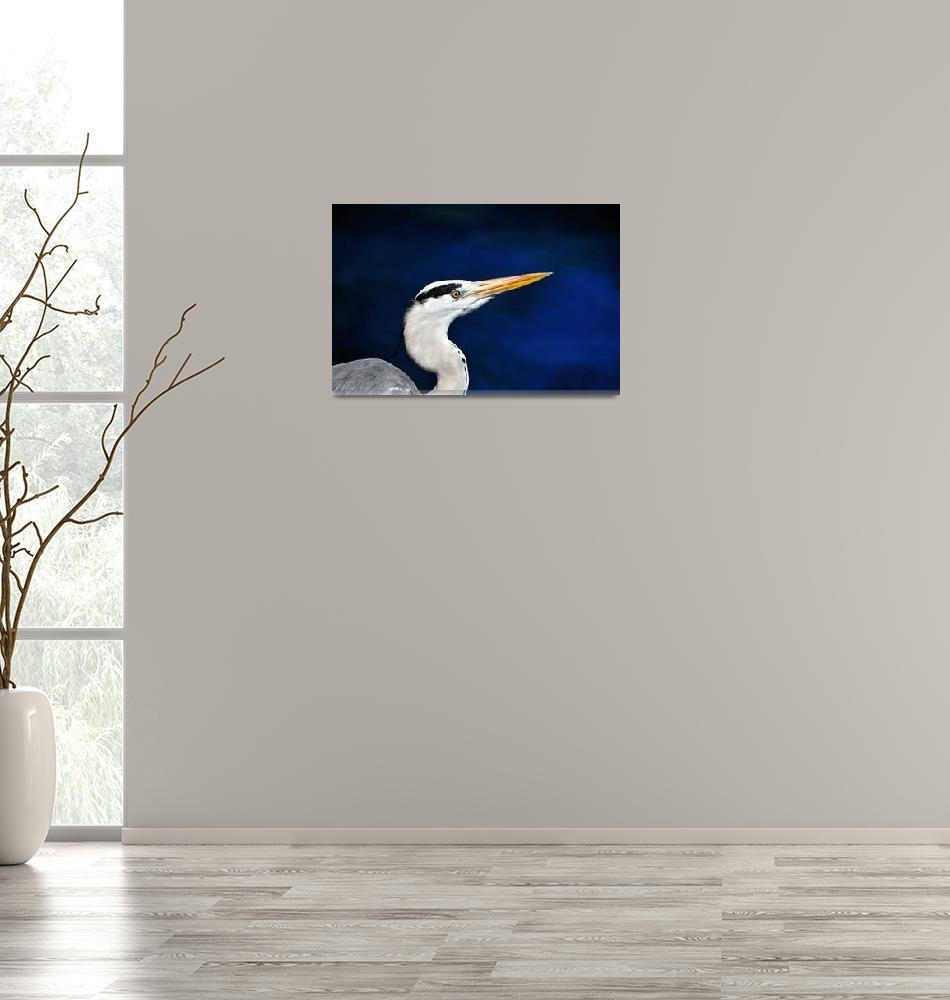 """Maldives Grey Heron""  (2008) by JoaoPonces"