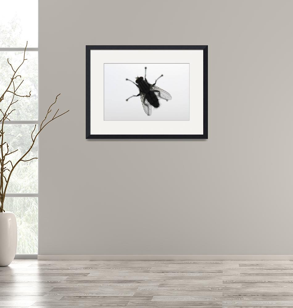 """""""Fly on the glass"""" (2011) by igorsin"""