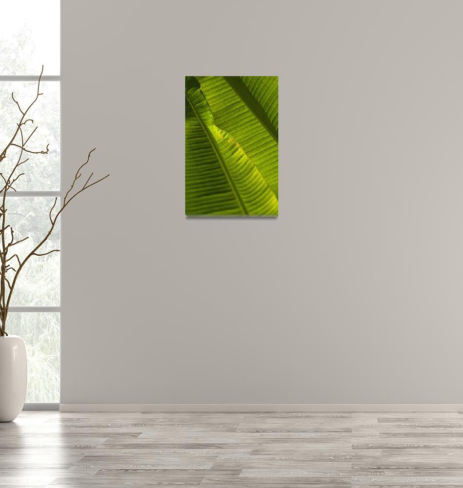 """Detail Of Palm Tree Barbados""  by DesignPics"