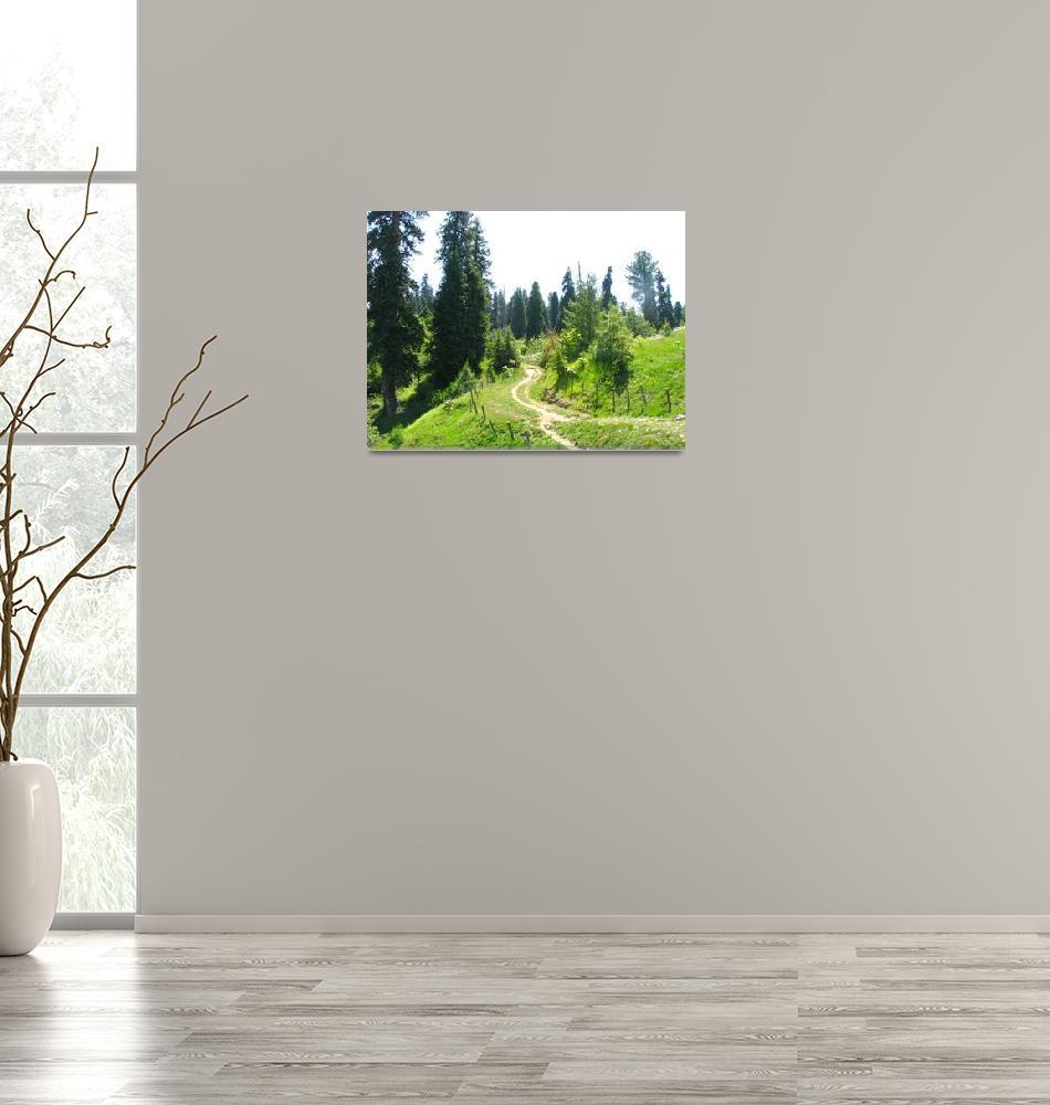 """Nathiagali Meadow Hiking Trail nathiagali_878005""  by davies"