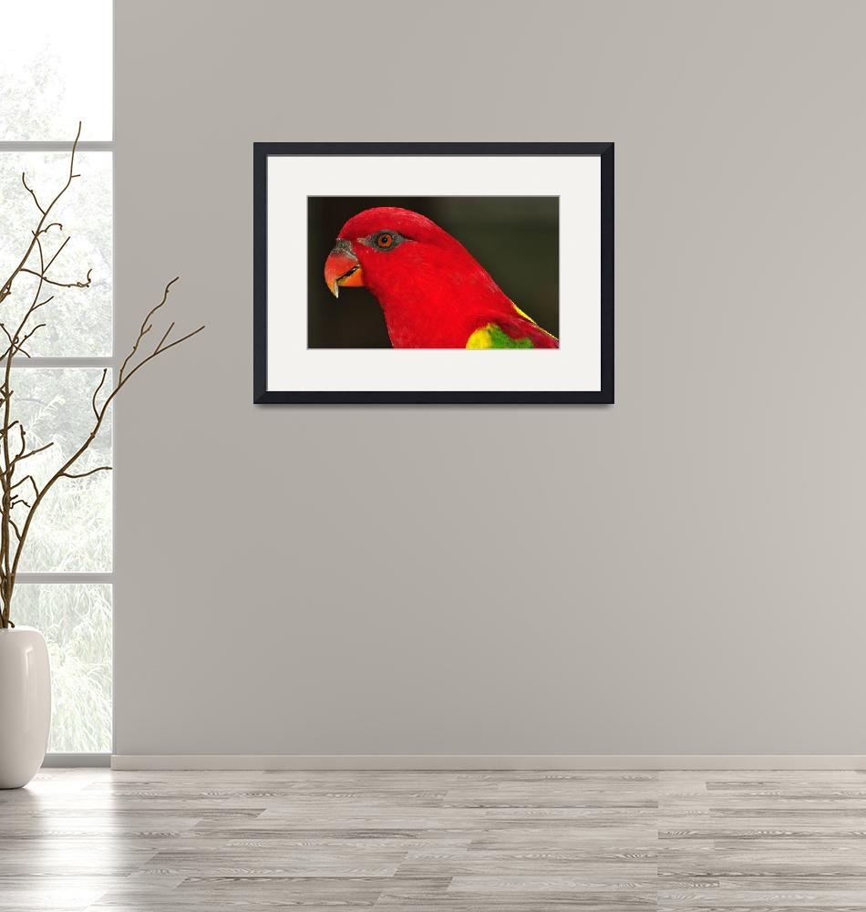 """""""Red Headed Parrot""""  (2013) by JoaoPonces"""