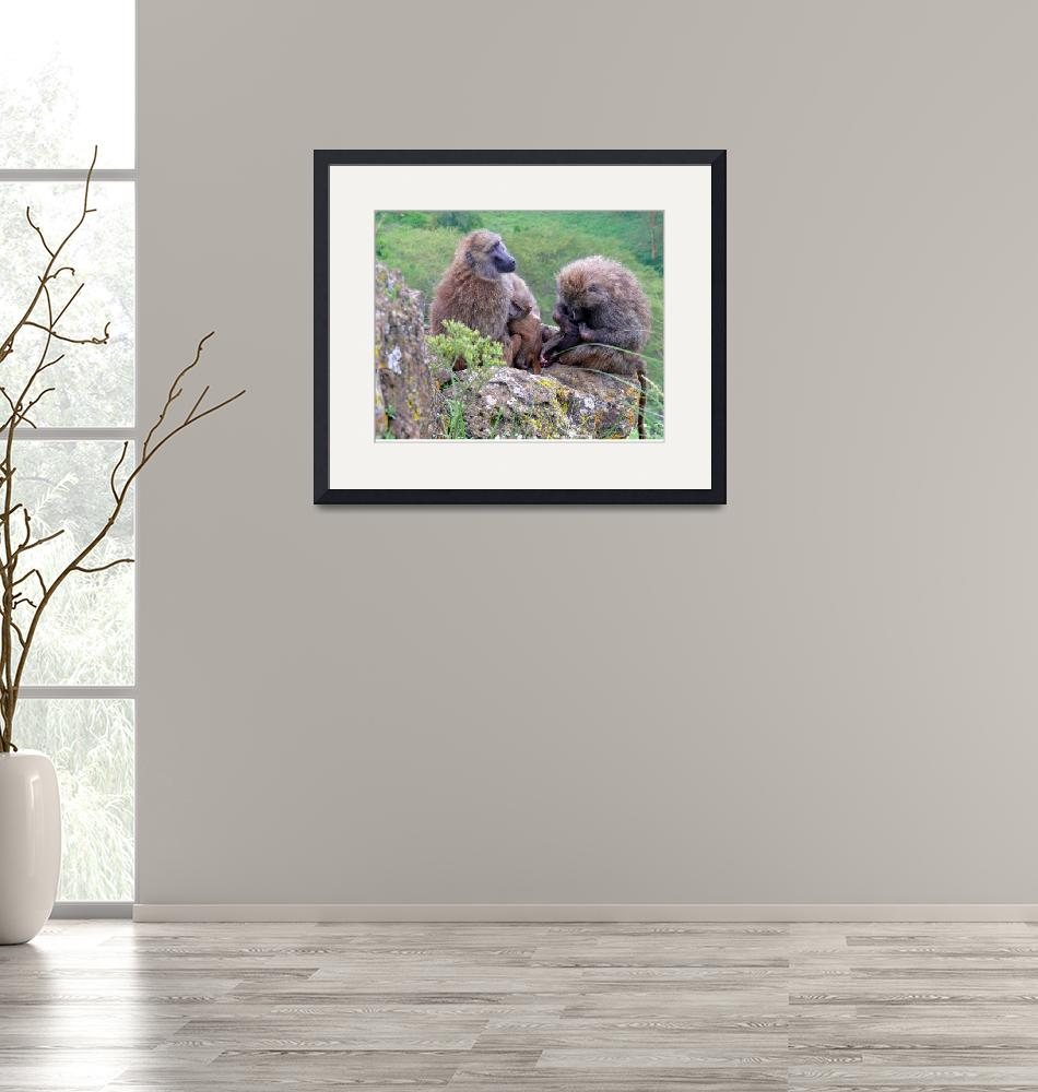 """""""Baboon Family""""  (2007) by stockphotos"""