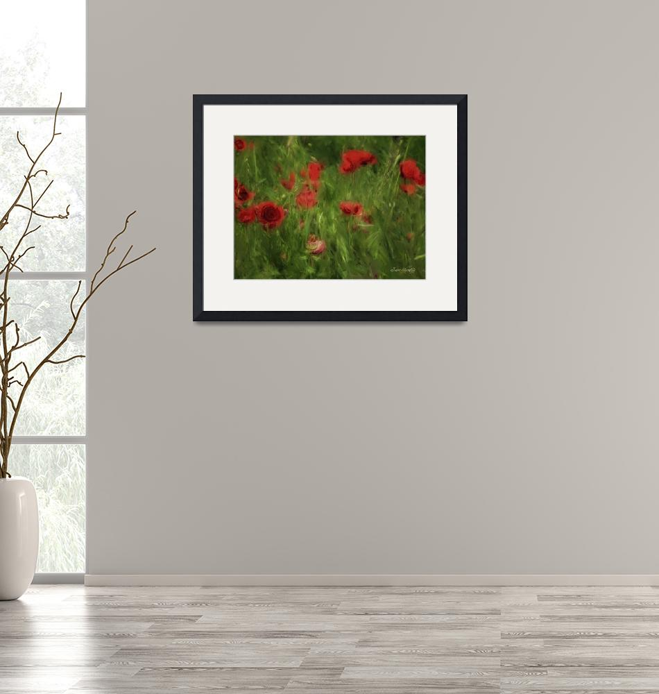 """""""POPPIES BLOWING GENTLY""""  (2012) by shaynaphotography"""