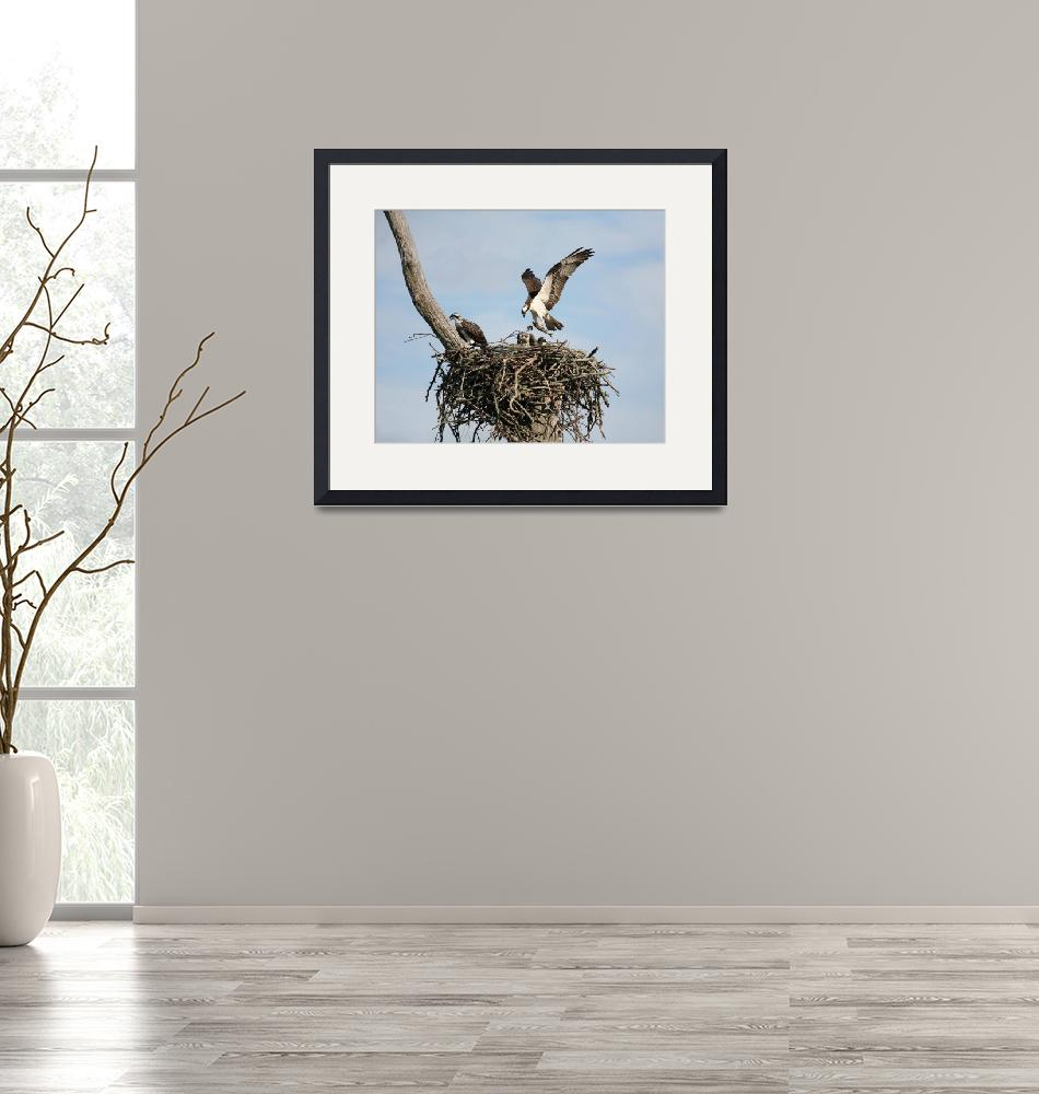 """""""Osprey daddy with Fish for Dinner!""""  by AngelCher"""