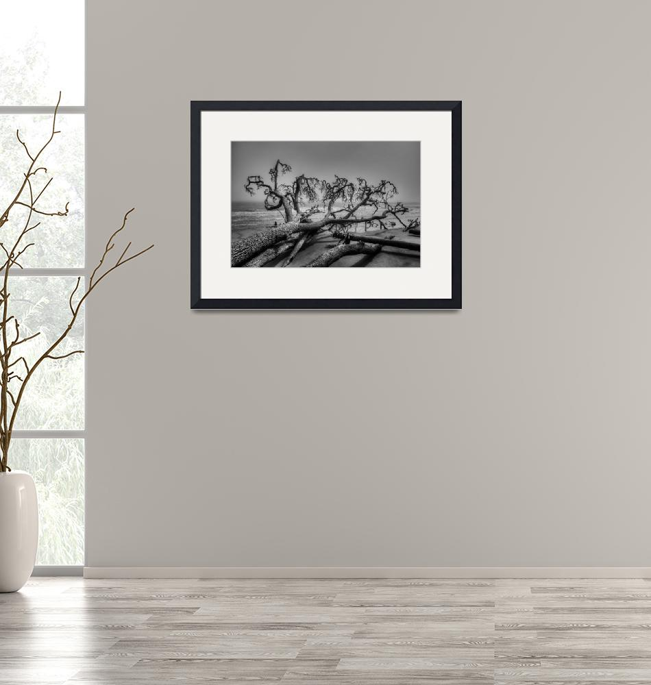 """""""Fallen Tree on Beach 