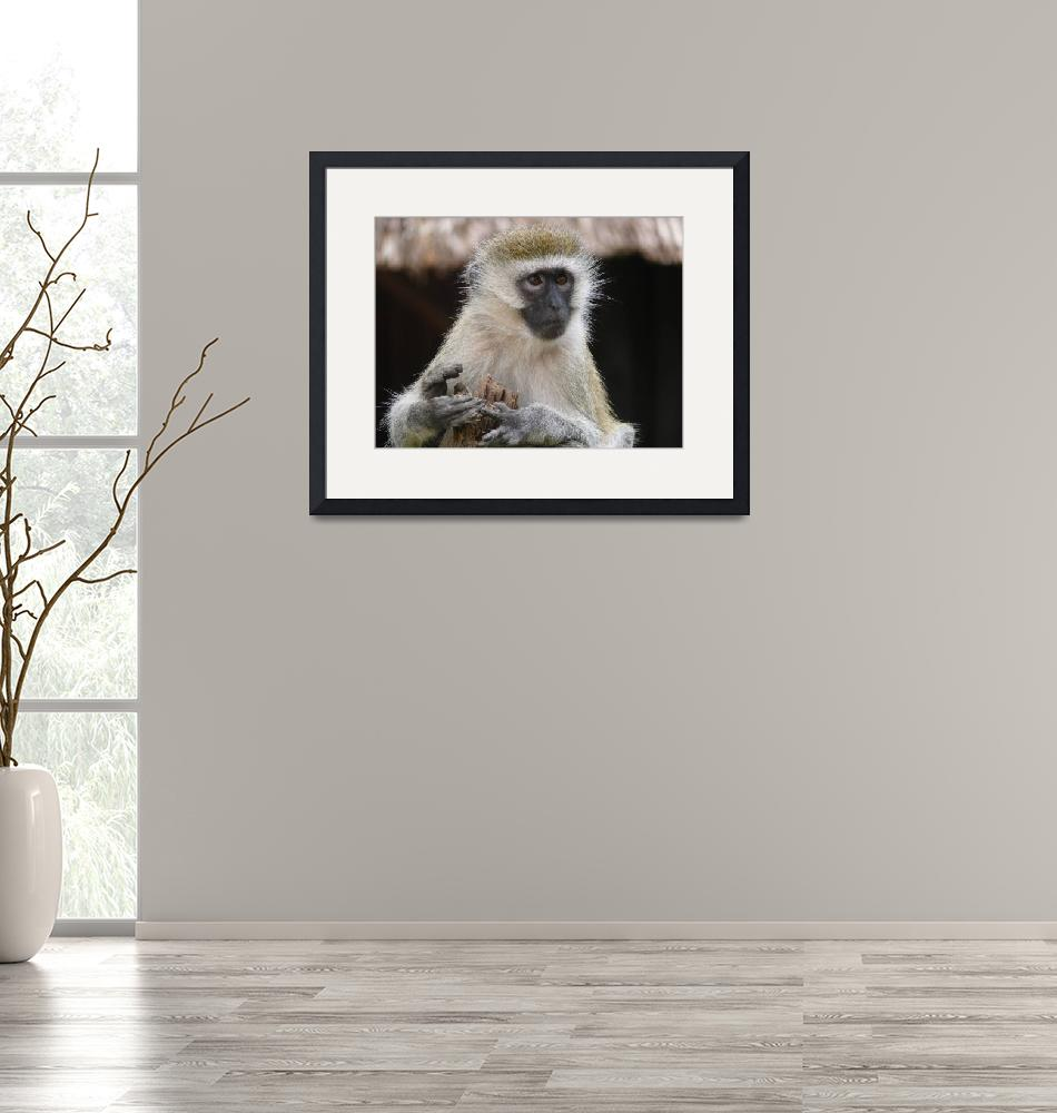 """Vervet Monkey""  (2007) by stockphotos"