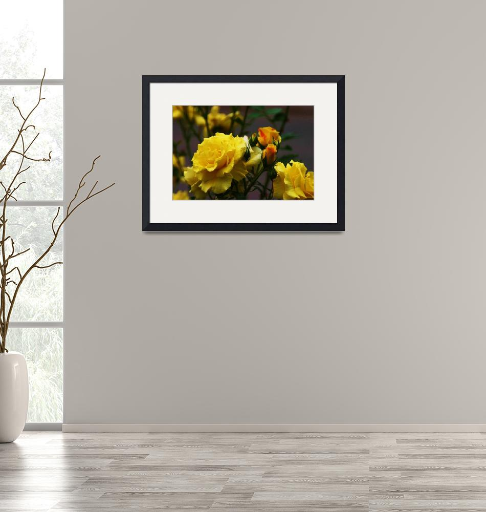 """""""My Yellow Rose""""  (2011) by picturesbybgale"""