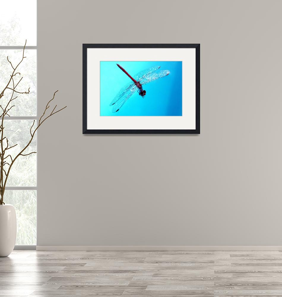 """""""Dragon Fly""""  (2006) by melinabean"""